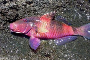 ZSI discovers new fish specie in Arunachal district