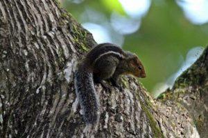 Squirrels remember problem solving techniques for long