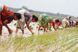 No cut & paste of farm tech; want to help India adapt: Israel