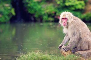 Novel wireless brain sensor helps paralysed monkeys walk
