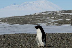 Antartica!