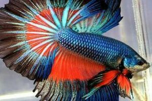 Thai fish with national flag colors auctioned for record high