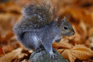 Squirrel Watch!