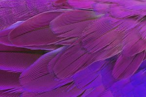 Bird fossil in China gives clues to feather colours