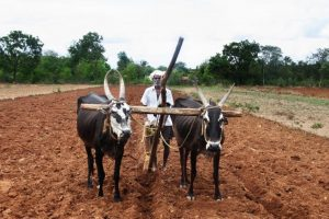 Odisha farmers to get Rs.1,776 cr in crop insurance