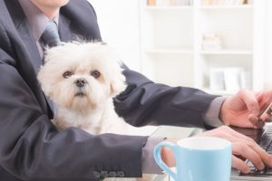 Now, new flu vaccines for dogs