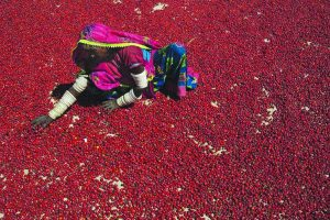 Life in the land of red hot chillies