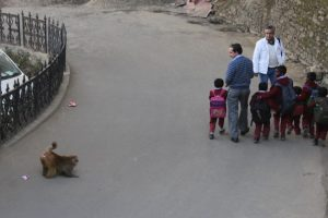 Centre may not allow Himachal to send monkeys to Northeast