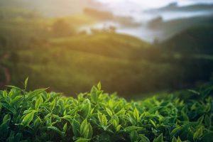 Assam focuses on agro-based industry