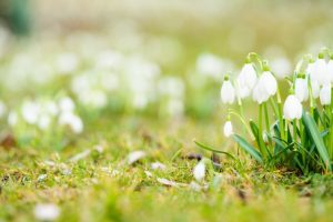 Beautify your garden with winter blooms