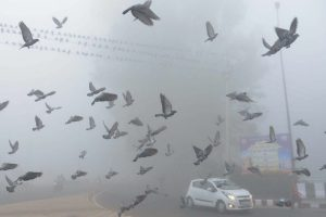 Cold Tuesday morning in Delhi, 22 trains cancelled