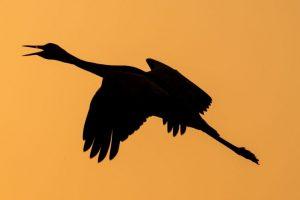 Cranes!