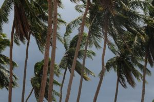 Cyclone Vardah hits Chennai, Nellore; 2 killed