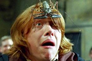 New spider species named after Harry Potter character
