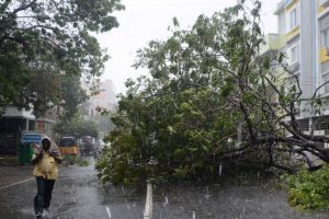 Day after Vardah: Chennai feels like a forest