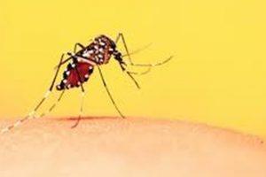 Odisha seeks 40 lakh mosquito nets to combat malaria
