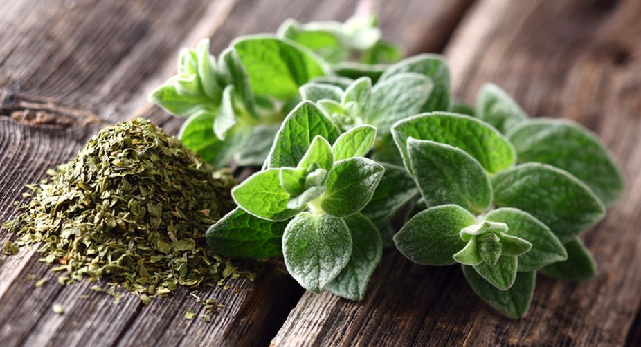 Sprinkle the goodness of oregano in your food