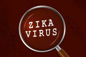 Decoded: How Zika virus infects developing brain