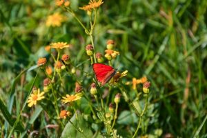 My Red Butterfly: A long journey of love
