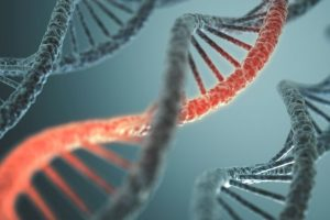 Extra weight affects your DNA
