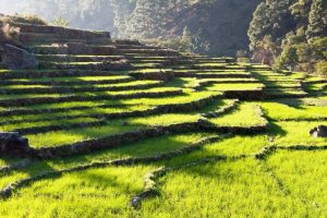 Sikkim is India's first fully organic state