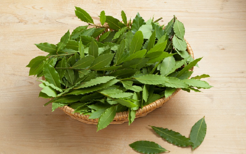 Bay leaves for taste and health