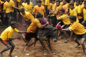 Jallikattu supporters in Madurai taken into custody