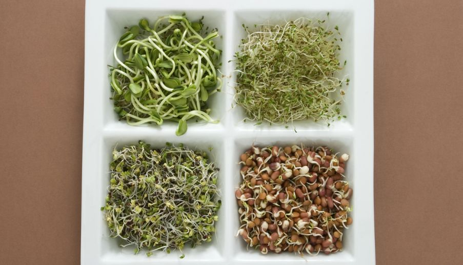 Eat bean sprouts and stay in shape the statesman just do it yourself sprout beans at home and consume them regularly for a healthier you solutioingenieria Image collections