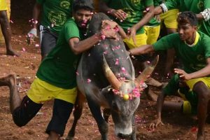 Government to withdraw notification permitting Jallikattu: SC told
