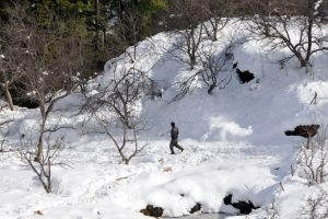 Himachal Pradesh apple growers can 'chill' for now