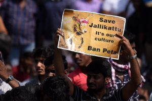 Jallikattu protesters removed from across Tamil Nadu