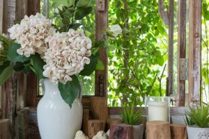 Why you should keep indoor plants