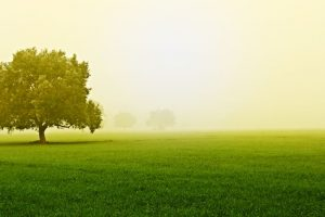 Haryana plans 'tree shade' for each village