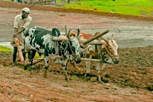 Maharashtra Congress demands farm loans waiver