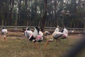 Punjab's flora, fauna to get facelift
