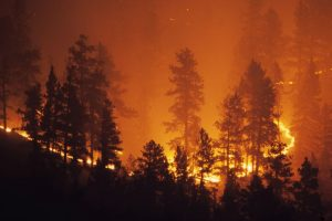 Homes destroyed in fierce Australian wildfires