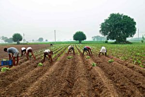 Organic farming: Tripura to take lessons from Sikkim