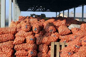 Floor price for onion exports reduced by USD 150 a tonne