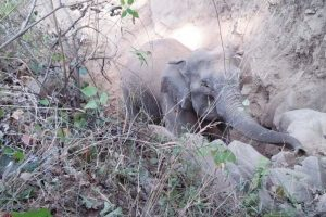 Baby reunited with mother elephant in special operation