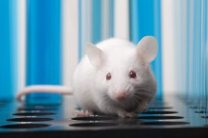 Scientists slow down ageing of mice with novel compound