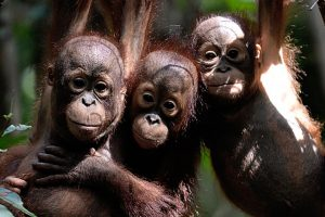 Celebrate World wildlife day with these adorable pictures