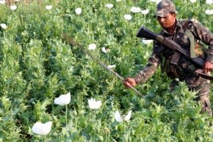 191 acres of illegal poppy plantations destroyed in Arunachal