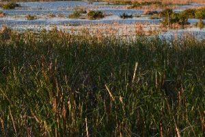 Punjab Ramsar sites under threat
