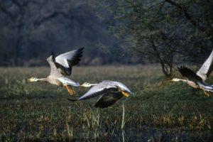 A symphony of bird-calls