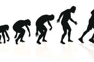 Darwin's theory of 'living fossils' gets support