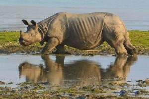 Two poachers killed in Assam national park