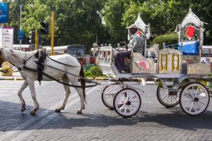 Victorias banned, rehab of men and horses still a far cry