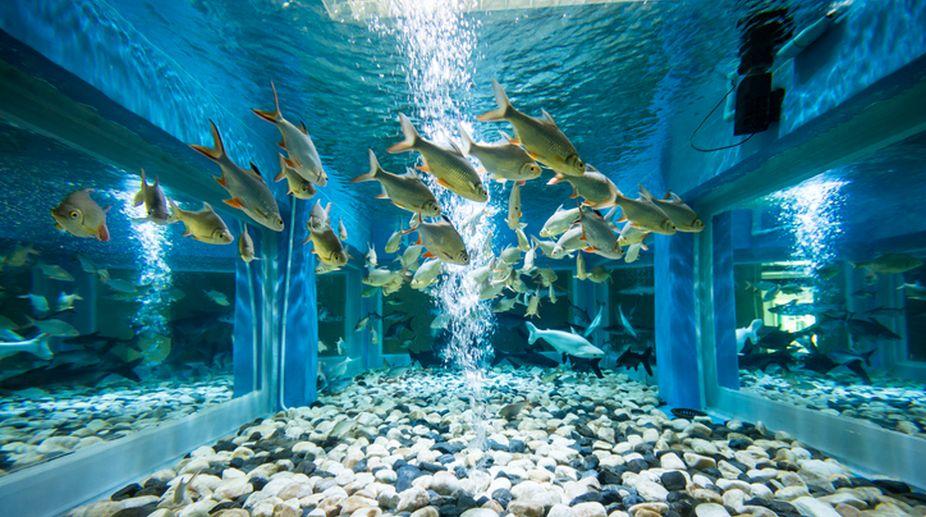 Why Keep A Fish Aquarium In The House The Statesman