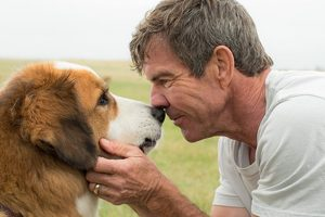 'A Dog's Purpose' to release in India on March 31