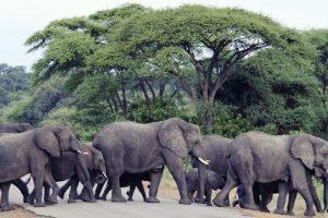 Elephants reek havoc in Baripada